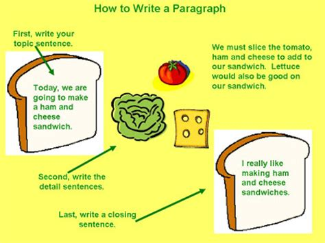 Persuasive essay components in the correct sequence
